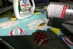 日本一周-9日目-夜